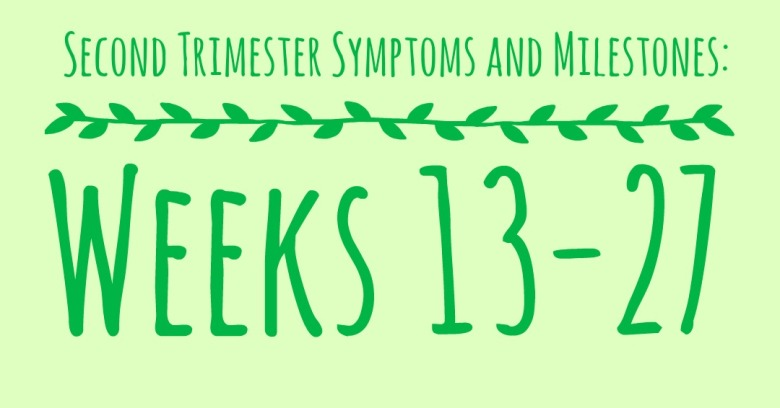 second trimester cover photo